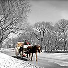 Central Park, Handsome cab ride. by Melissa Fiene