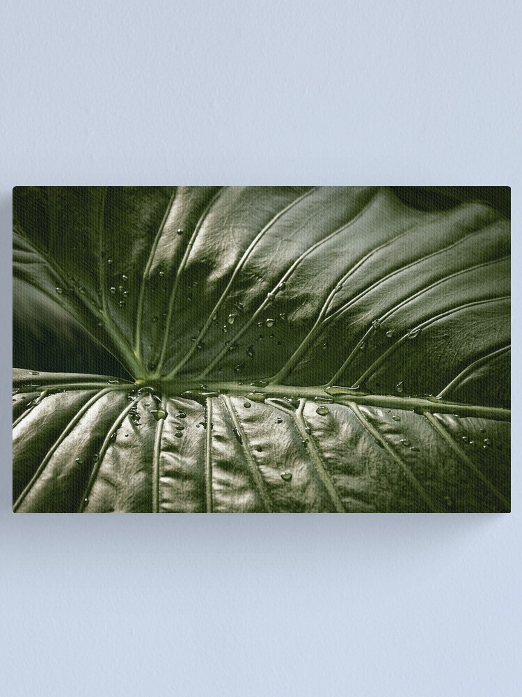Alternate view of Leaf Green Canvas Print