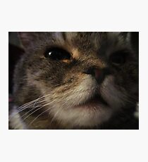 Furry Face Photographic Print