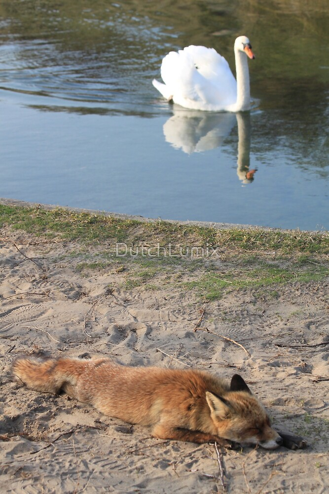 Sleeping Red Fox and the White Swan by DutchLumix