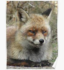 Fox  0214 Poster
