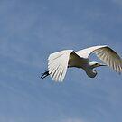 Grace In Flight by Deborah  Benoit