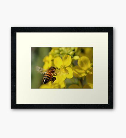 Bee Free Framed Print