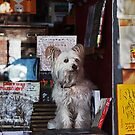 How much is that doggie in the window ? by JudyBJ