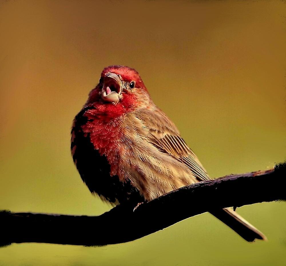 Sing little bird Sing~ by RoseMarie747