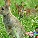 Happy Easter - Wild Bunnies - NZ by AndreaEL