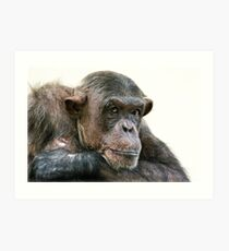 Chimpanzee Portrait Art Print