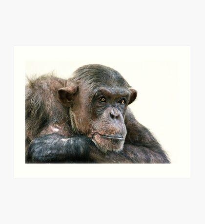 Chimpanzee Portrait Art Print