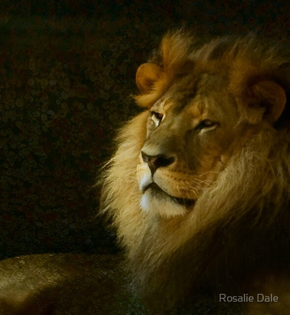Simba by Rosalie Dale