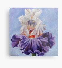 Iris - Purple bearded iris flower Metal Print