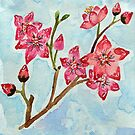 Cherry Blossom Flowers Watercolor - Red and Pink by aliciahayesart