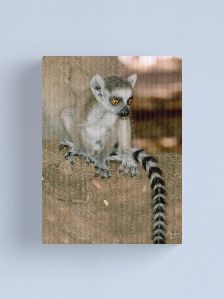 Alternate view of Baby lemur Canvas Print