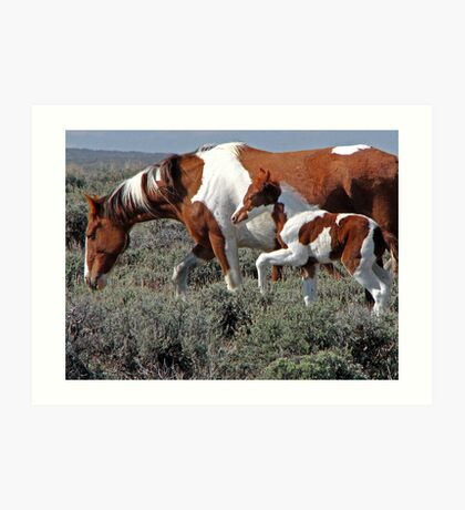 Wild Pinto Foal, Red Desert, Wyoming Art Print
