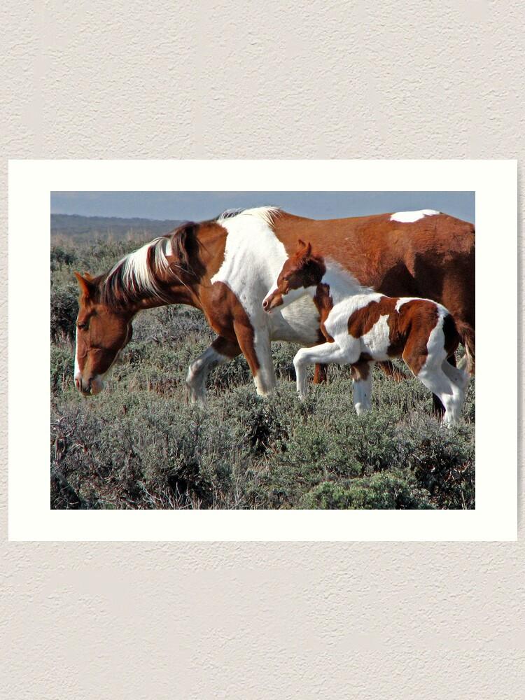 Alternate view of Wild Pinto Foal, Red Desert, Wyoming Art Print