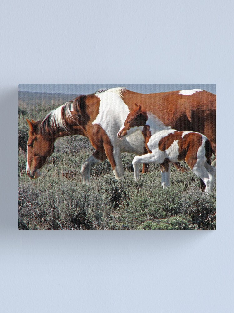 Alternate view of Wild Pinto Foal, Red Desert, Wyoming Canvas Print