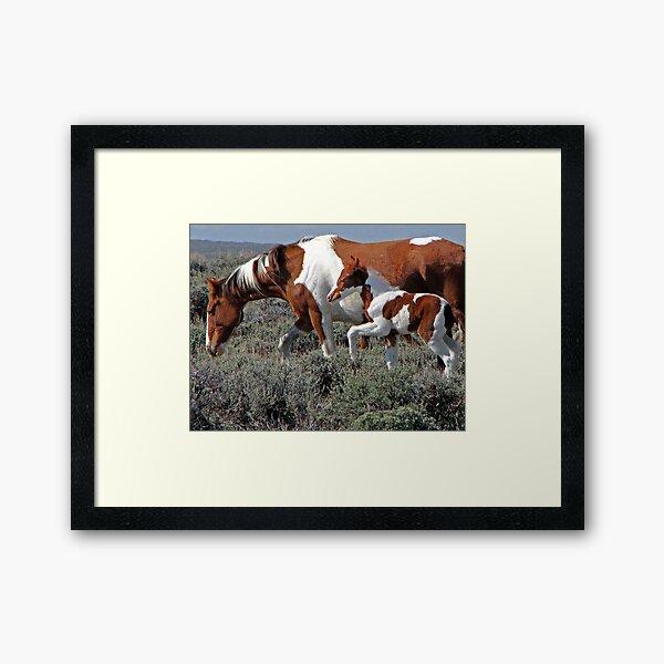 Wild Pinto Foal, Red Desert, Wyoming Framed Art Print