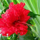 Hibiscus by Akash Puthraya