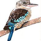 Blue Winged Kookaburra by blueidesign