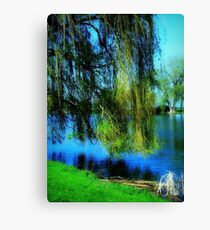 Beautiful weeping willow tree ©  Canvas Print