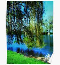 Beautiful weeping willow tree ©  Poster