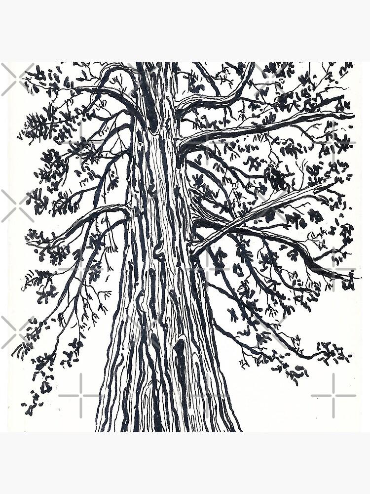 california redwood by swellart