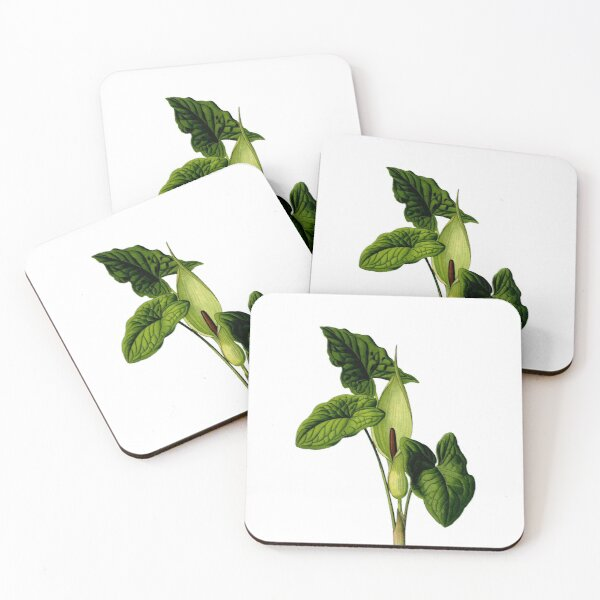 Flower and leaves of Arum maculatum Coasters (Set of 4)