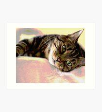 Tabby Cat Pop Art Art Print