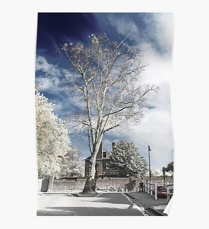 Infrarouge -  Infrared tree Poster