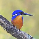 """ Azure Kingfisher  Marlo Vic."" by helmutk"