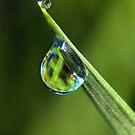 Two Droplets by Sheri Nye