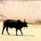 Lone Bull by Akash Puthraya