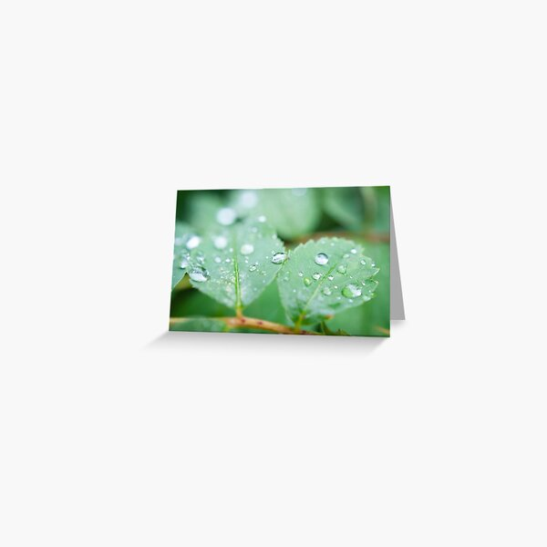 After the rainfall Greeting Card