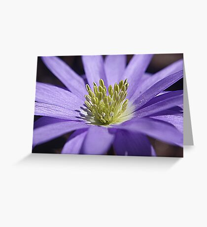I've Got The Blues (Anemone) Greeting Card