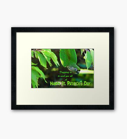 Dropping In To Wish You All A Happy St. Patrick's Day - Conure NZ Framed Print