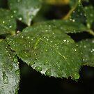 Leaf Macro by Stephen Horton