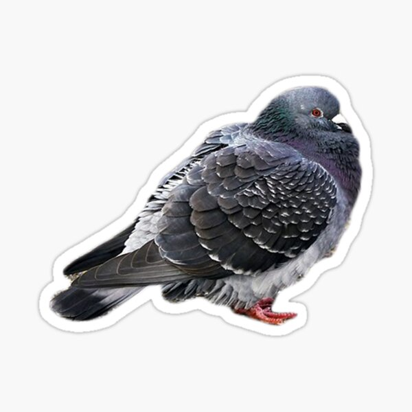 A Fat Pigeon for Peyton Sticker