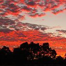 Serpentine Sunset by Stephen Horton