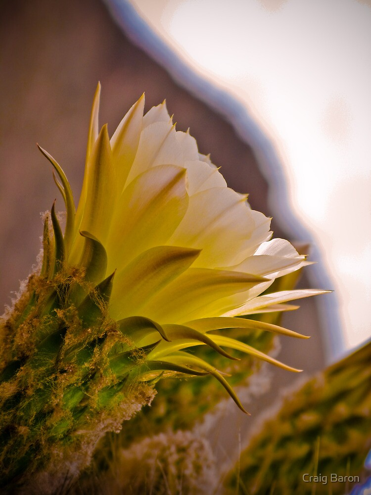 Spring Flower by Craig Baron