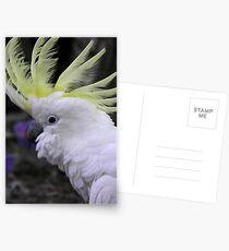 Sulphur Crested Cockatoo - Science Park, South Australia Postcards