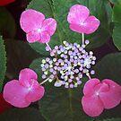 Dawning by Lozzar Flowers & Art