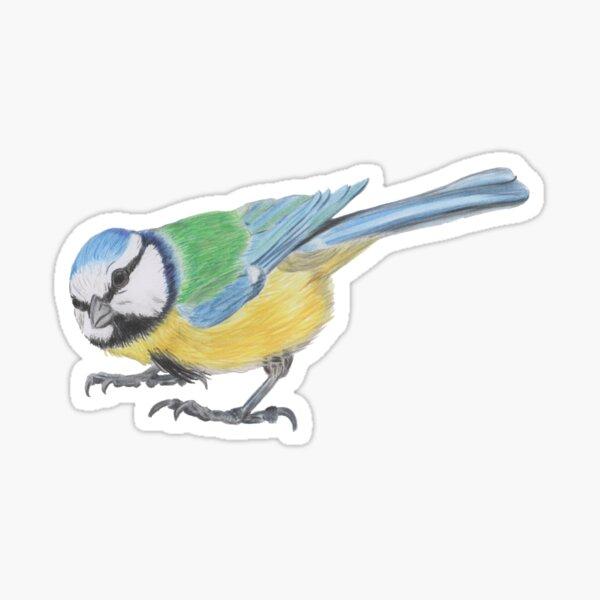 Bluetit 4/4 Sticker