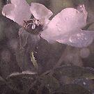 Under His Wings by Lozzar Flowers & Art