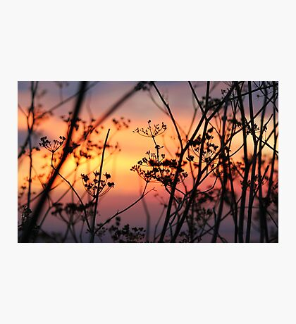Rainbow Bushes Photographic Print