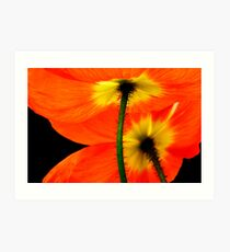 Poppies - For My Pop Art Print