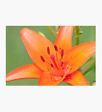 Of Orange Red and Pink Photographic Print