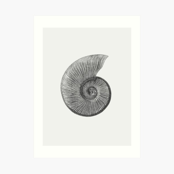 Ammonite Fossil Art Print