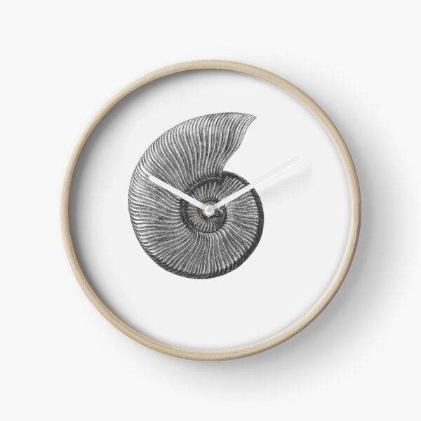 Ammonite Fossil Clock