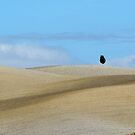 Lonely tree by pljvv
