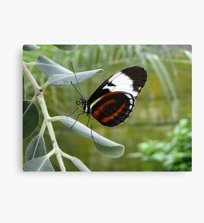 Butterfly Beauty Canvas Print