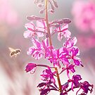 Bee & Fireweed by Alex Preiss